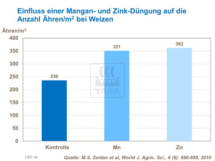 Fabelhaft Wie Sie die Blatt- und Triebzahl bei Weizen erhöhen | Yara Deutschland #QM_06